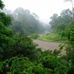 Rich Wildlife At Danum Valley