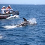 Whale-Watching At The Sea Of Cortez