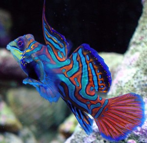 coloured reef fish