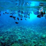 Go Snorkeling at Molokini