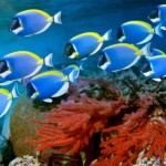Awesome Andaman Sea Reefs