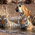Wildlife Tour along with Hiking Adventure in India