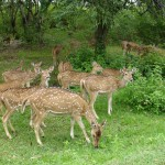 Top Wildlife Destinations in South India