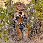 Wildlife haven in India – Ranthambore Sanctuary