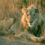 Wildlife Destinations and Safaris in South Africa