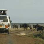 Cheap vacations of wildlife tours