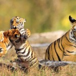 Sunderbans Wildlife Sanctuary Pleasures and Tour Delights