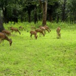 Wildlife Pleasures at the Nagarhole National Park