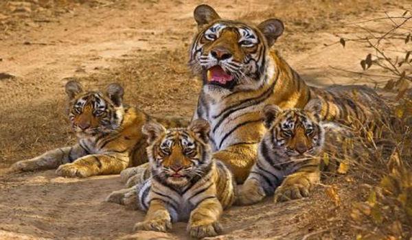 Wild Pleasures at the Wayanad Wildlife Sanctuary