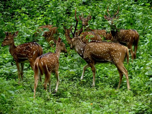 Wild Pleasures of Wayanad Wildlife Sanctuary