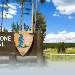 Yellowstone National Park One Of the Best Wildlife Destinations